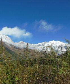 Wälder und Gräser im Annapurna-Massiv