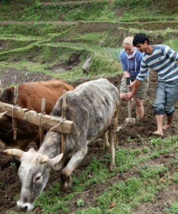 Volunteers helfen beim Bewirtschaften der Felder