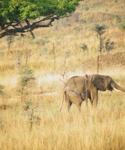 Elefant im Murchison Falls Park