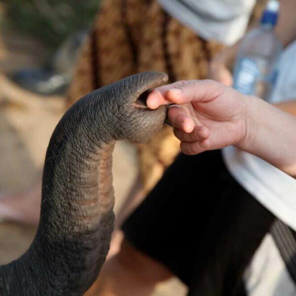 Elefantenrüssel berührt Hand