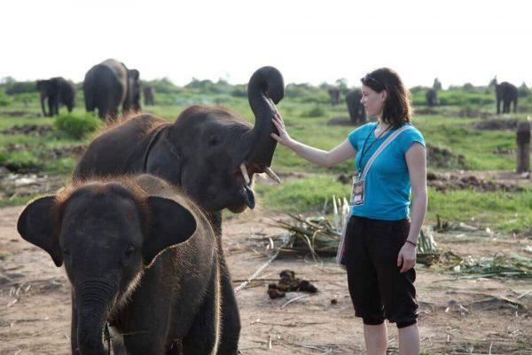 Volontärin streichelt den Rüssel eines Elefanten