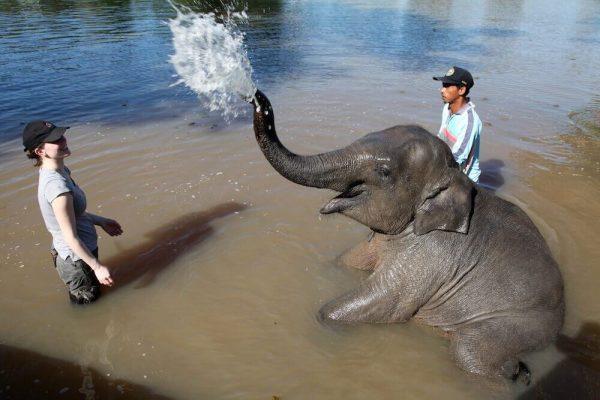 Volontärin mit einem Mahout und einem Elefanten im Wasser