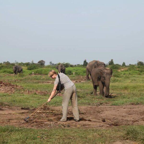 Volontär bei der Arbeit im Elefantencamp