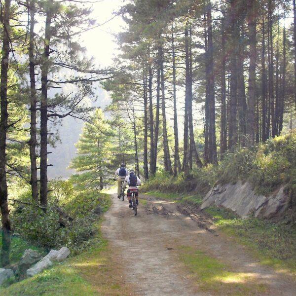 Zwei Radfahrer fahren durch den Wald