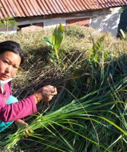 Frau hockt mit einem Büschel Gras auf dem Boden