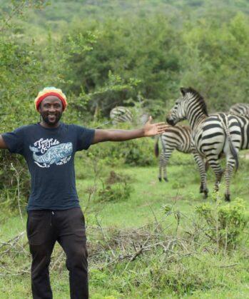 Mann mit bunter Mütze steht vor einer Zebraherde