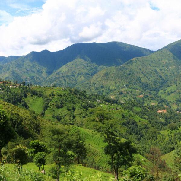 Grüne Natur in Gaujini
