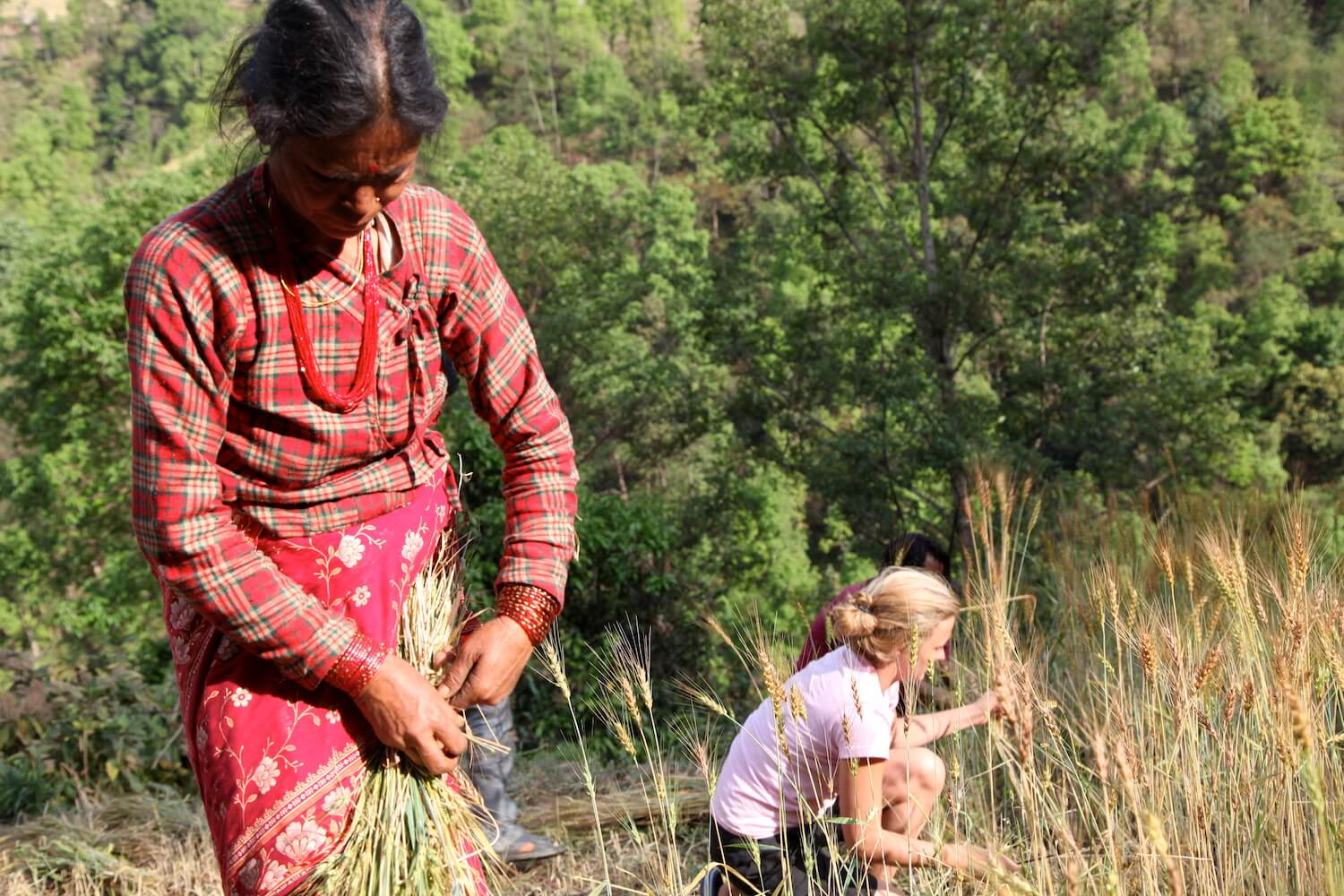 Farming in Gaujini