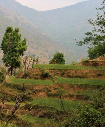 Reisterrassen in Gaujini