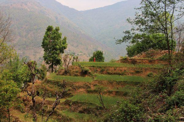 Landschaft in Gaujini