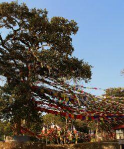 Bunte Gebetsfahnen in Nagi Gumba