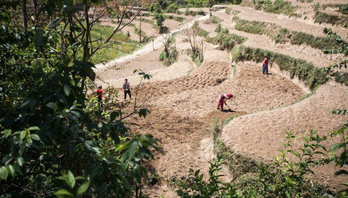 Reisterrassen soweit das Auge reicht