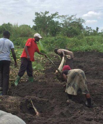 Volontäre & Einheimische beim Farming in Uganda