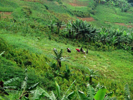 Einheimische beim Farming in Uganda