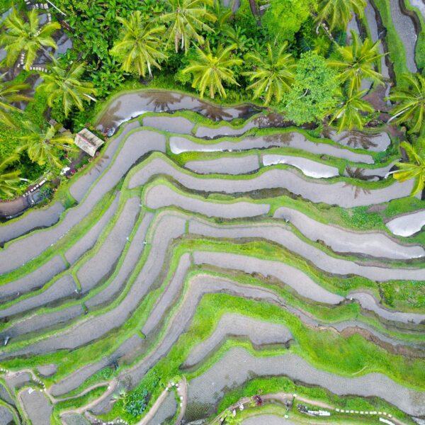 Blick von oben auf die Reisterrassen in Bali