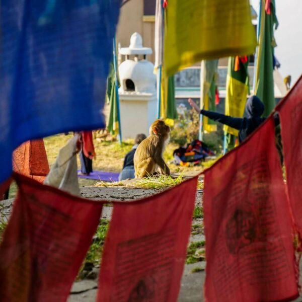 Gebetsfahnen im Kloster in Nepal