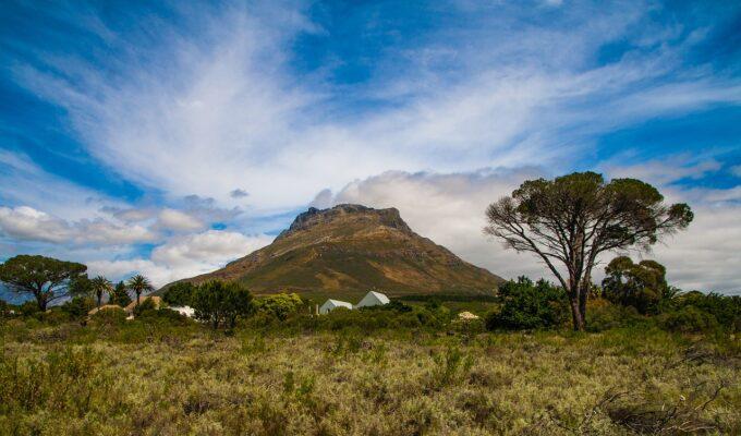 Blick auf die Weinberge in Stellenbosch, Südafrika