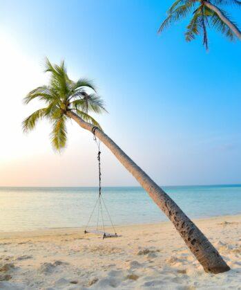 Palme mit Schaukel auf den Malediven
