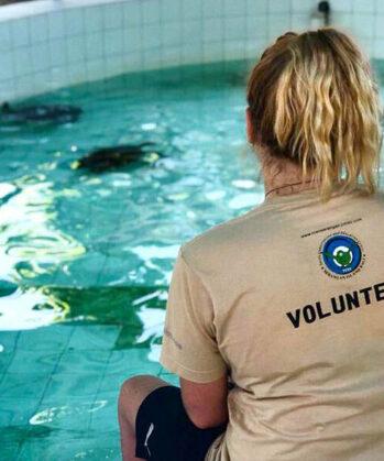 Volontärin blickt auf Schildkröten-Aufzuchtbecken