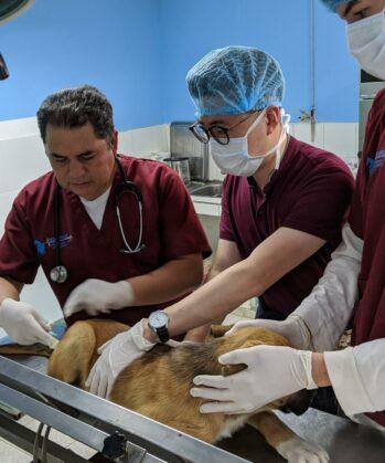 Operation in der Tierklinik Peru