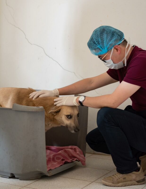 Medizinischer Check-up Tierklinik