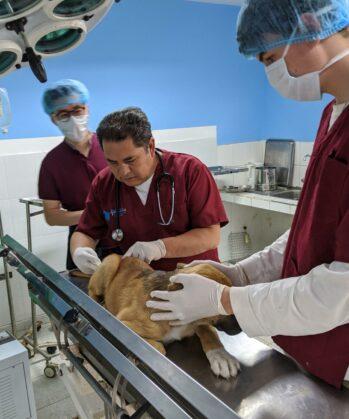 Hunde-Impfung in der Tierklinik in Peru