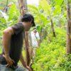 Volontär auf Plantain Plantage in Costa Rica