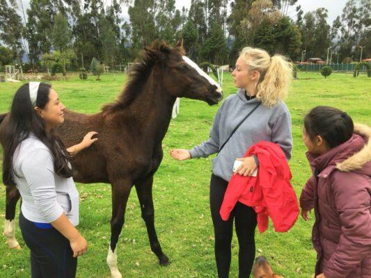 Volontärinnen streicheln Pferd